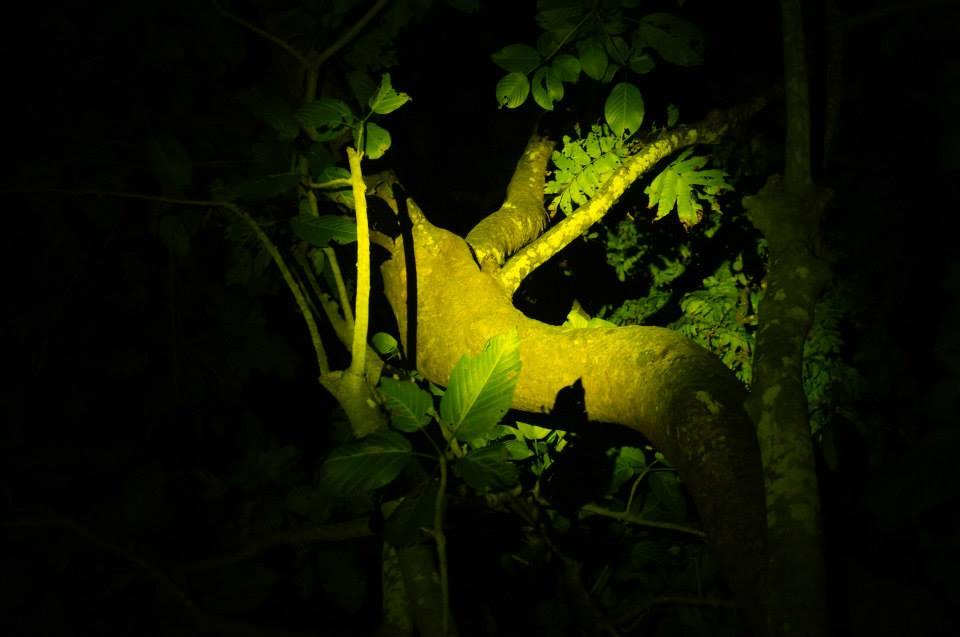 蘭嶼夜間導覽,在漆黑的夜裡觀察蘭嶼生態聽蘭嶼故事,動植物都不該隨意撿回民宿喔