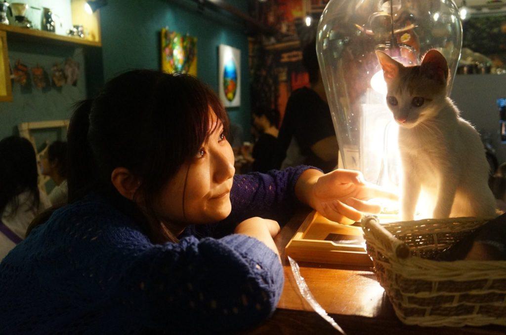 微貓,白日貓咖啡館,美股投資人,願望探險家。
