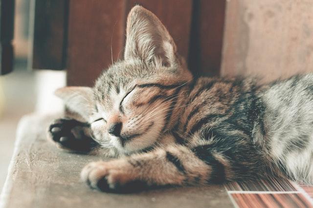 美好預言之像貓兒一樣一直懶洋洋可以嗎~~~?