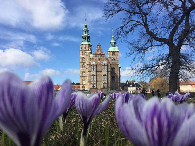 哥本哈根復活節限定,迷人的羅森堡與紫色花海。